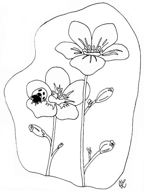 Blumen mit Marienkäfer | Kindergaudi