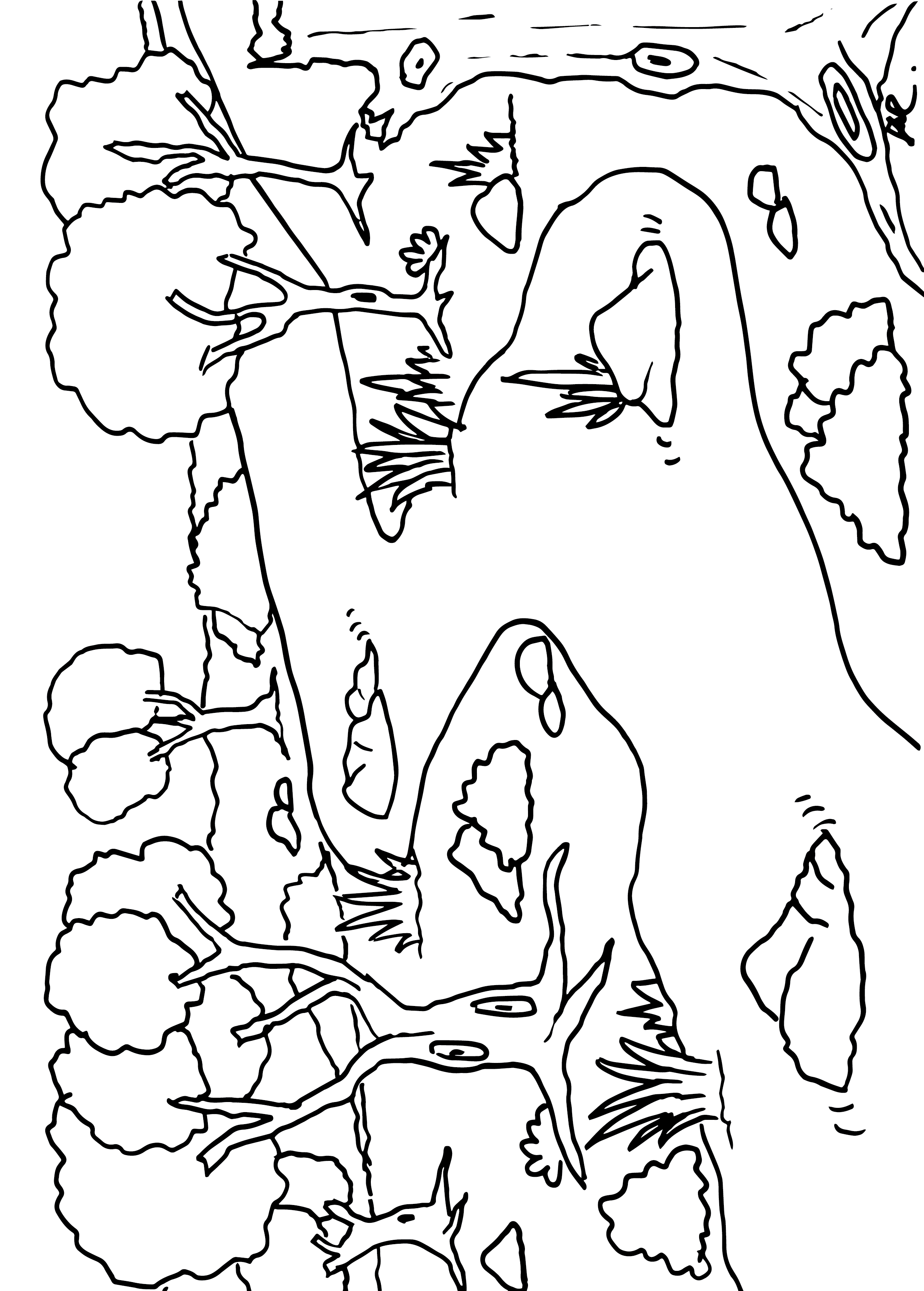 Alte Bäume am Fluss