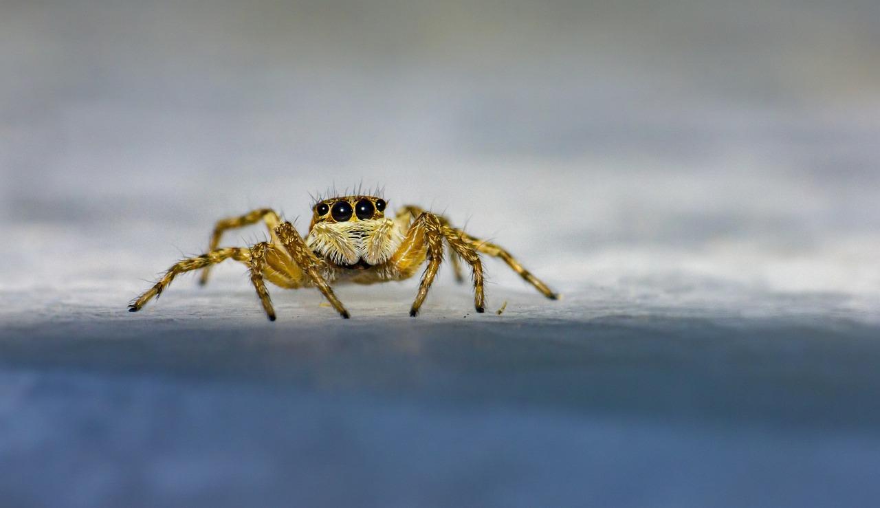 Eine Kleine Spinne Krabbelt An Der Wand